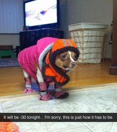 Animals are the best entertainment in the World, which make us laugh anytime, anywhere! Just look ridiculous animal picdump of the day 73 if you love funny animals. So ridiculous, funny and cute 25 funny animal pics! I Love Dogs, Puppy Love, Cute Dogs, Funny Animal Pictures, Funny Animals, Cute Animals, Wild Animals, Funny Photos, Funny Cute