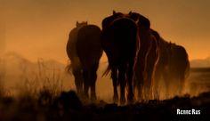 https://flic.kr/p/TGo2Rh | Horses in the evening