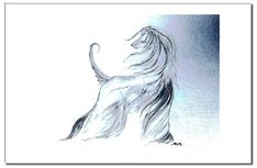 afghan hound gesture drawing - Google Search