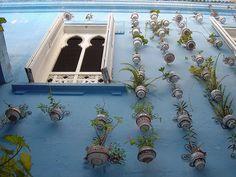 Vertical gardens, Morocco. #containergardens #hangingbasket