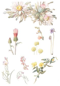 Watercolor Floral Image Collection Volume 2 - INDIVIDUAL Vintage Flower PNG Images for Altered Art, Digital Scrapbooking - Printable Flowers