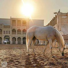 Good Morning #Doha #Qatar Photo by@jassim_al_thani