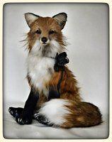 FIAMMA the red fox by francesca Boretti, KALEideaSCOPE