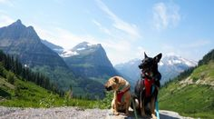 Traveling to Glacier National Park in Montana with dogs presents some challenges, but we found pet friendly activities that allowed both us and the dogs to enjoy the trip. Find more pet friendly places to stay and things to do near Glacier National Park here: http://www.gopetfriendly.com/browse/united-states/montana/west-glacier