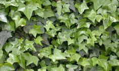A consultora de feng shui Mariângela Pagano fala da importância das plantas em casa