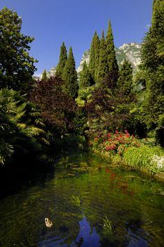 More than 200 species of flowers and trees to discover.  www.dulacetduparc.com