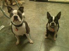 WagAware Ambassadors Jax and his rescue sister Minnie! You are both so cute & make WagAware proud! Get yours www.WagAware.com.