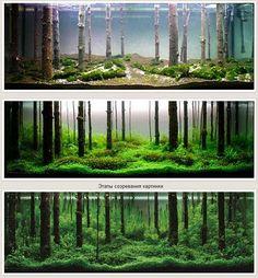 Forest Aquascape
