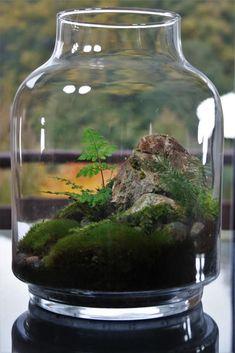 To create a bonsai, you need to start with a source material specimen. Mini Terrarium, Terrarium Cactus, Terrariums Diy, Terrarium Scene, Garden Terrarium, Moss Garden, Succulents Garden, Moss Plant, Paludarium
