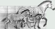 Millions of years of horse development suggest that one of the key assumptions of evolutionary theory may be wrong.