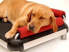 Fancy - DoggySnooze: Dog Bed Sofa