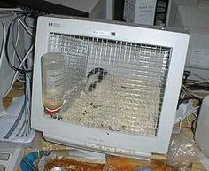 Hamster cages do seem a bit expensive these days. 20 Creative and Cool Ways To Reuse Old Computer Parts 14 Transformers, Monitor Pc, Alter Computer, Hamster Cages, Hamster Toys, Hamsters, Rodents, Rat Cage, Aquarium