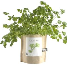 How does your garden grow? With the new Garden in a Bag, your 'potted plants' don't even need pots! Just open, water, and watch it grow. $9, available in cilantro, oregano, parsley, basil, mint and strawberry!    Garden in a Bag // $9 // poketo.com