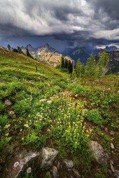 Meadows below Maple Pass