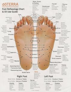 Reflex therapy is a simple method of applying oils to contact points (or nerve endings) in the feet or hands. The charts below show the contact points and the oils that correspond to each one.