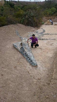I love a man wanting discover our ancient world. Must take me with him always❤ Kronosaurus fossil. Can you even imagine what this looked like when it was swimming through the ocean? Jurassic Park, Jurassic World, Dinosaur Fossils, Dinosaur Bones, Extinct Animals, Prehistoric Creatures, Science And Nature, Archaeology, Mammals