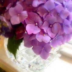 hydrangea bouquet- love the purples!