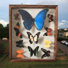 Street Artist Turns Buildings into Gigantic Butterfly Specimen Cases