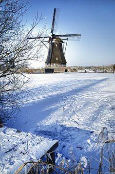 Winter scenery in Holland Kingdom Of The Netherlands, Holland Netherlands, Amsterdam Netherlands, Leiden, Rotterdam, Winter Scenery, Iris Flowers, Winter Photography, Travel Photography