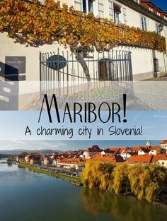 Maribor is the second largest city in Slovenia, with 95.000 inhabitants. The city has a long tradition of wine production, surrounded by hills and vineyards.