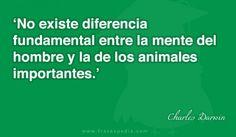 No existe diferencia fundamental entre la mente del hombre y la de los animales importantes.