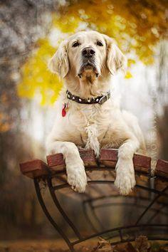 Dog Photography by Alicja Zmysłowska #petphotography,