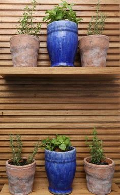 Horta em casa. Painel de madeira com prateleira e vasos para cultivo de ervas dentro de casa. Horta na varanda. Vasos cerâmicos. Blog : Danyela Corrêa | Arquitetura e Interiores