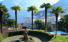 Top of Europe and Swiss Palm Trees tours are customized for 5 days/ 4 nights and 6 days/ 5 nights. You can choose a suitable plan for a fascinating holiday experience. Palm Trees Landscaping, Landscaping Ideas, Parts Of The Earth, Visit Switzerland, Lugano, Beautiful Places In The World, Best Memories, Scenery, Places To Visit