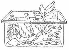 Søer og moser er i øjeblikket fulde af små haletudseæg. Her er en idé til, hvordan man kan holde haletudser og se dem blive til frøer eller tudser.