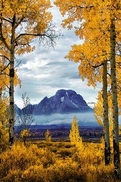 SEASONAL – AUTUMN – fall leaves in brilliant colors decorate the landscape of the moran aspens.