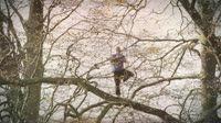 Boomknuffelaar slingert als aap door bos