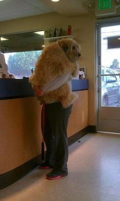Poor baby dog has to be carried into the vet.