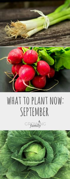 Not sure what you should be planting in the garden in September? Check out this guide to crops and flowers that you can sow in September for harvesting and enjoying later on in the autumn or next spring.