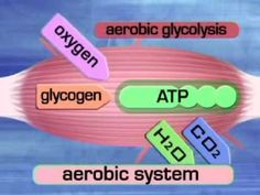 Aerobic System (Aerobic glycolysis).wmv - YouTube NOTE: You never completely use up your fat stores but the body does begin to break down muscle to fuel prolonged physical activity after glycogen stores are depleted. (The video gets that part wrong.)