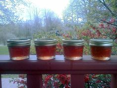 Nettle Tea, Wild Violet Jelly, and foraging for wild edibles...