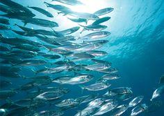 О рыбах. Дикие и домашние рыбы.: Короткое сообщение об интересном 15