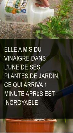 She put vinegar in one of her garden plants, which happened 1 mi .