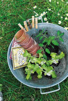Des pinces à linge en guise d'étiquettes - Marie Claire Herb Garden, Garden Tools, Garden Club, Grandmas Garden, Balcony Plants, Potting Sheds, Perfect World, Garden Gifts, Botany