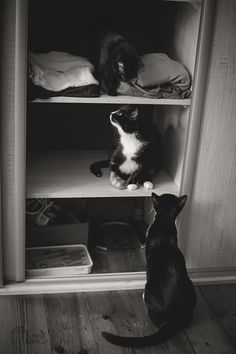 My Black-And-White Catography Reveals Their Hypnotizing Beauty | Bored Panda