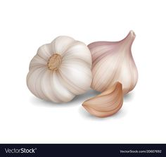 Photo realistic garlic on white background Vector Image Fruit Painting, Dot Art Painting, Vegetable Pictures, Vegetable Painting, Food Clipart, Fruits Drawing, Still Life Drawing, Free Hand Drawing, Food Pyramid
