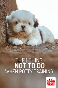 Potty training your puppy can be a challenge and all the experts seem to have their own opinion on the best way to do house training. Either way heres one thing you should never do when Housebreaking a puppy. Puppy Training Tips, Training Your Dog, Training Pads, Training Collar, Agility Training, Dog Agility, Training Equipment, House Training A Puppy, Potty Training Puppies