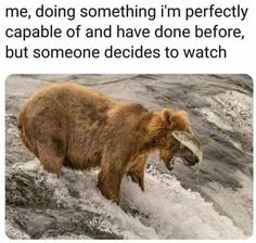 Tagged with funny, memes, meme, funnymemes, memedump; Memes I've stolen cause I can relate. Stupid Funny, Funny Cute, The Funny, Funny Stuff, Dog Stuff, Funny Things, Memes Humor, Jokes, Funny Humor
