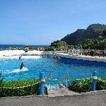 Sea Life Park Hawaii (OAHU)