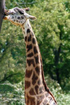 Grassmere Zoo