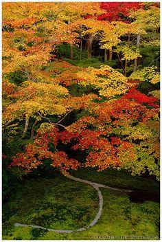 Autumn colours over moss garden, Ruriko-in temple 瑠璃光院, Kyoto, Japan