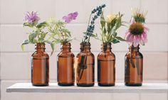 Kräuteröle, Tinkturen und Salben selbst herstellen - GartenMagazine.de