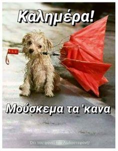 Good Morning, Rain, Dogs, Tube, Animals, Buen Dia, Rain Fall, Animales, Bonjour