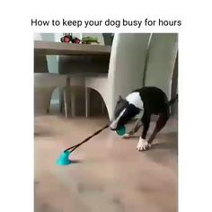 Your dog will never be bored again! Our interactive toy will keep your dog entertained for hours on end. They'll have no idea why it won't come off! Cute Funny Animals, Cute Baby Animals, Animals And Pets, Funny Birds, Cute Puppies, Cute Dogs, Dogs And Puppies, Doggies, Funny Dog Memes
