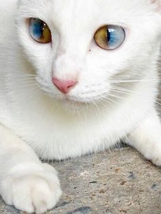 Two colored eyes