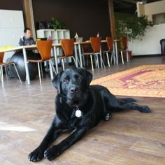 A Furry Coworking Enthusiast at Office Nomads (dogs need community too)